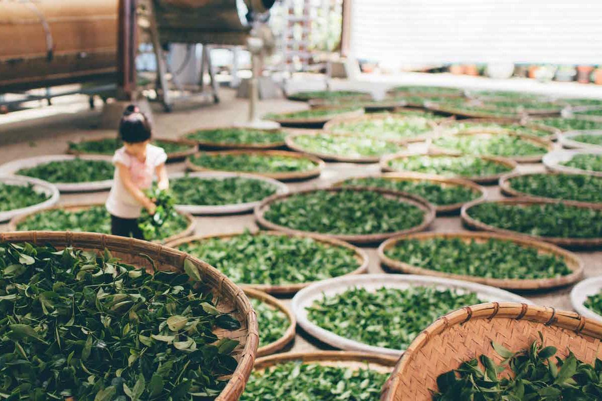 20 geniale Gründe, täglich grünen Tee zu trinken